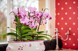 Innenraum Kastanienhof Brötzingen, Altes Pfarrhaus Pforzheim, Rote Tapete, Rosa Orchideen